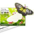 gpa_butterfly1