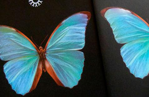 301-butterfly-1
