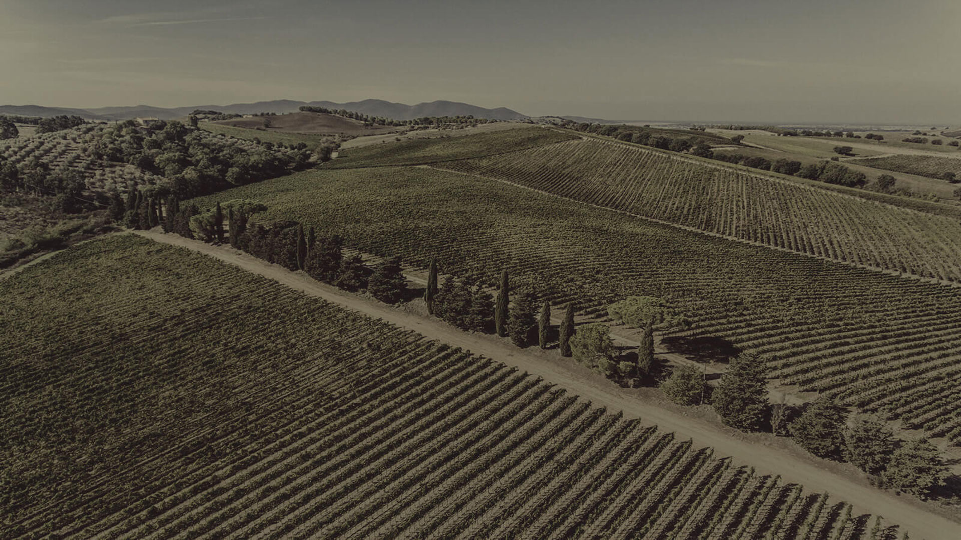Con Vista Wine Label - PaperSpecs